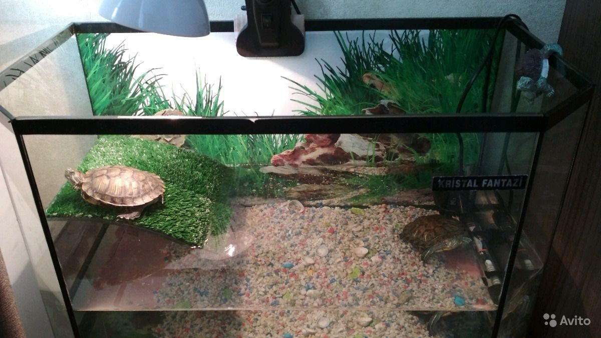 Аквариум с черепахами