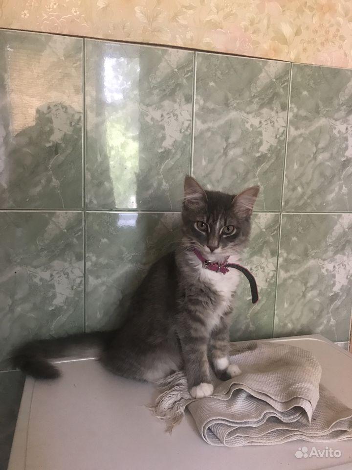 Отдам кошку в хорошие руки в Феодосии - фотография № 3