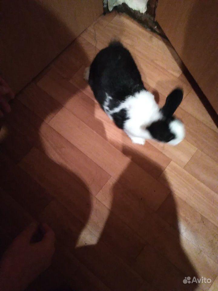 Кролик японский