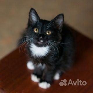 Кот-красавчик - фотография № 1