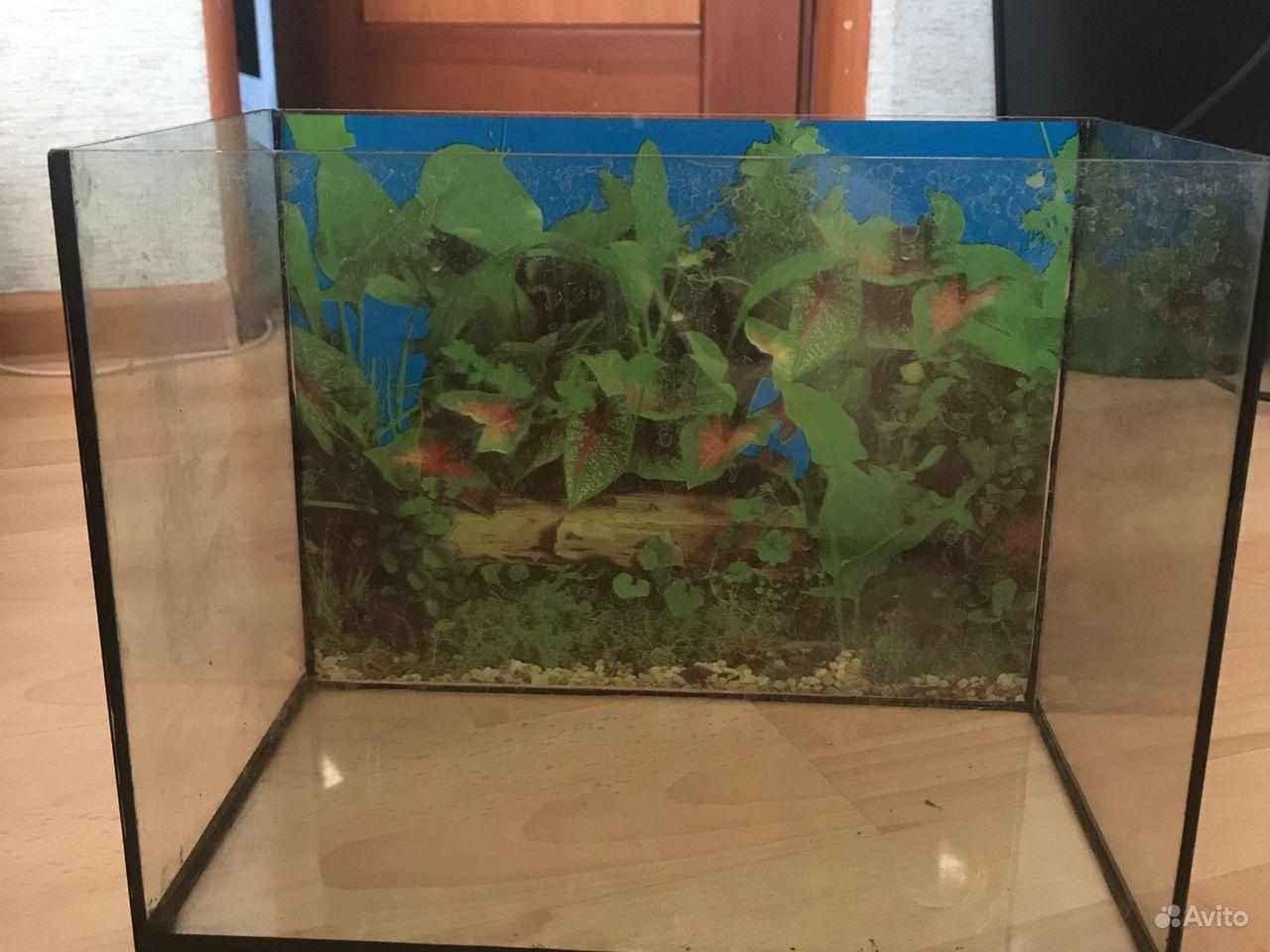 протечка аквариума фото открытка нашла более