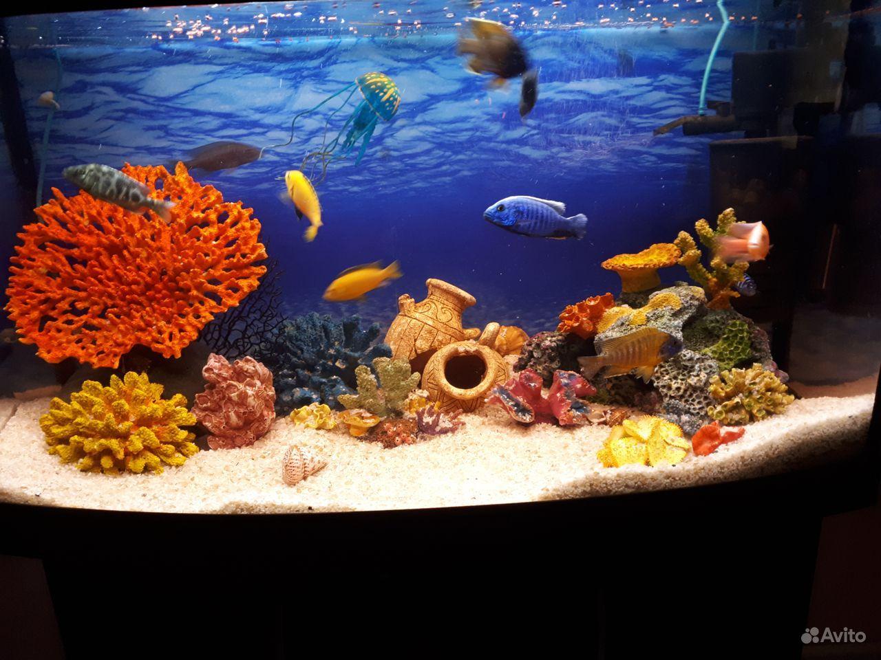 Кораллы, гроты, камни для аквариума купить на Зозу.ру - фотография № 9