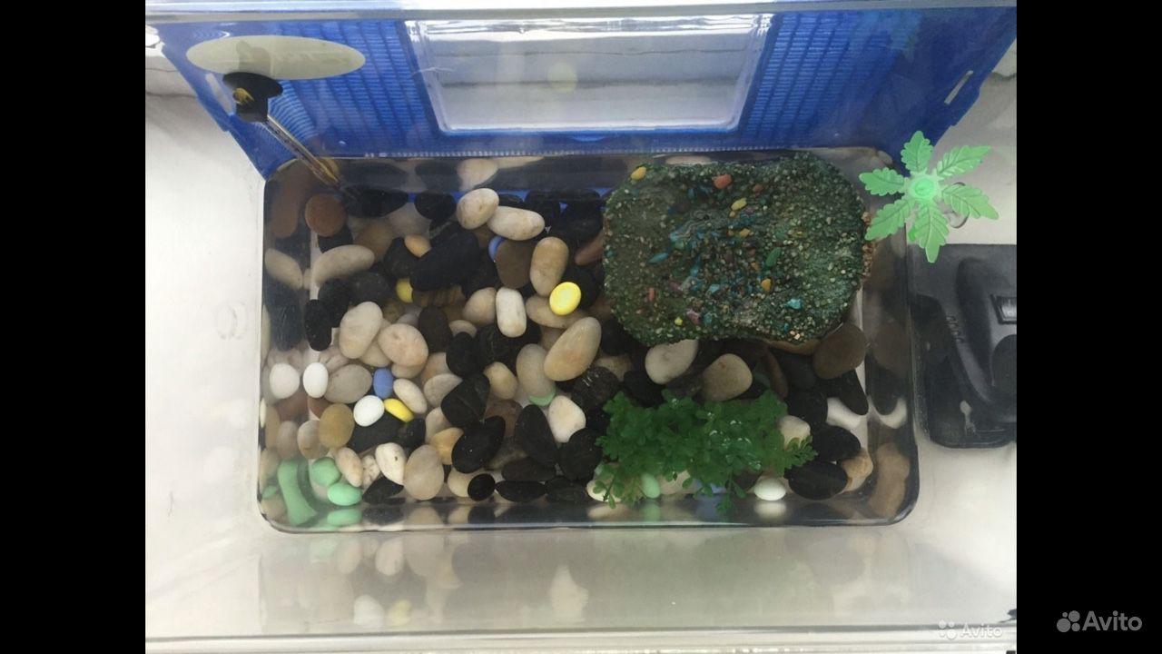 Островок в аквариум для черепахи купить на Зозу.ру - фотография № 3