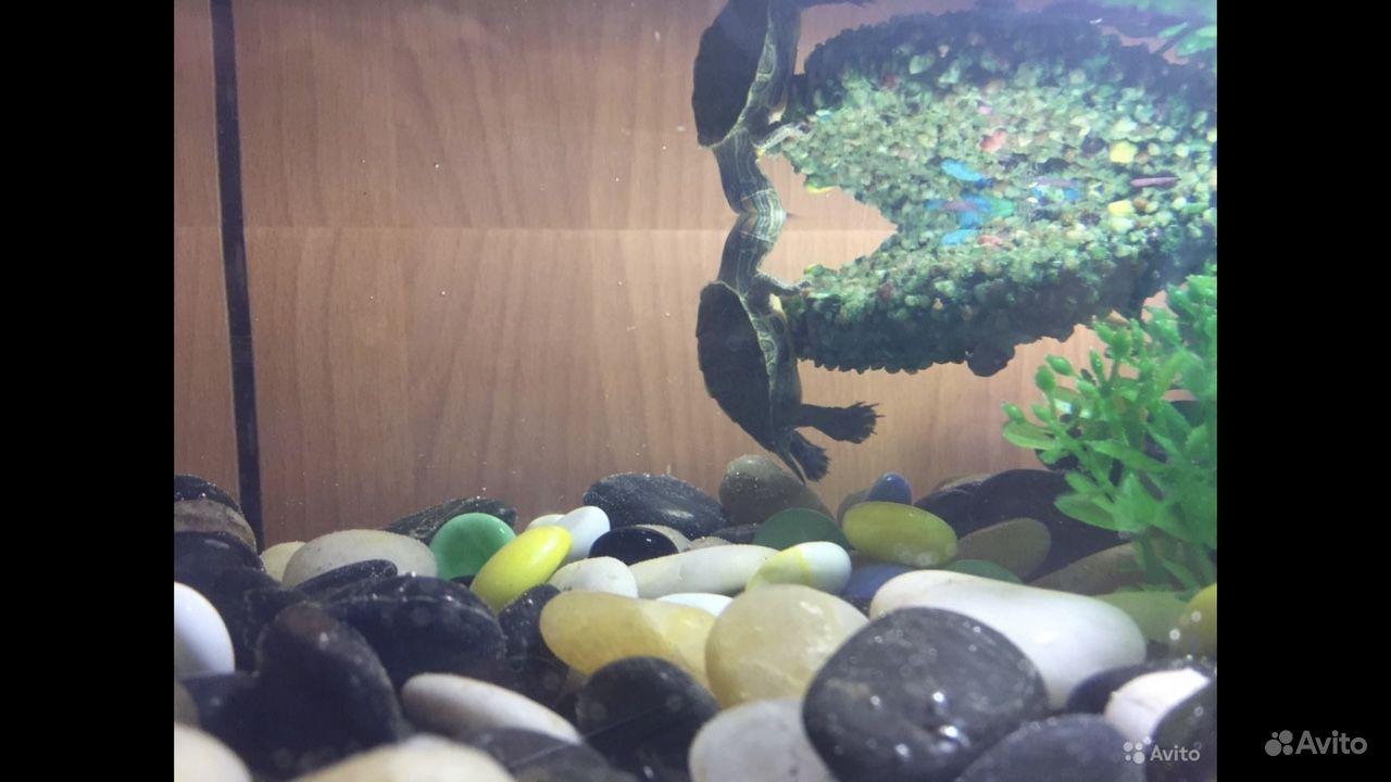 Островок в аквариум для черепахи купить на Зозу.ру - фотография № 4