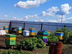 Продаю пчел, рои