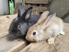 Кролики 1,5 месяца