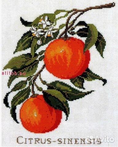 Вышивка (набор для вышивания) Цитрус (Дания) купить 1