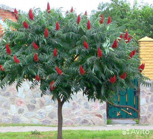 Виды деревьев россии фото и названия