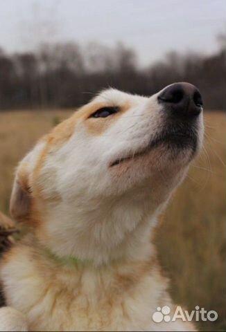 Собака щенок Эви в добрые руки бесплатно купить на Зозу.ру - фотография № 2