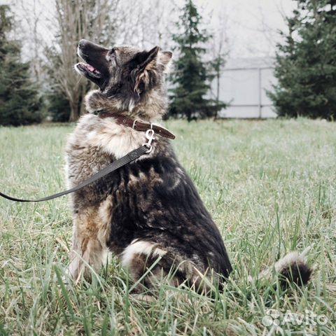 Добрейшая чёрная собака ищет дом купить на Зозу.ру - фотография № 1