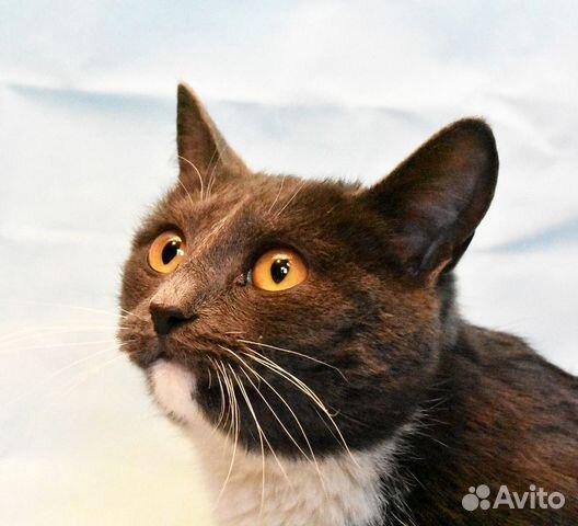 89137249811 Кошка Вероника-янтарные глазки