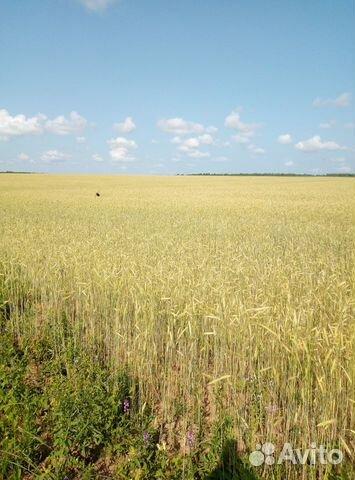 Зерно ржи фуражное, 20 тонн купить 1