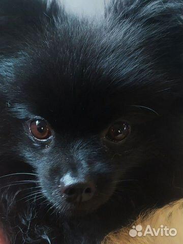 Собака  89201319108 купить 2