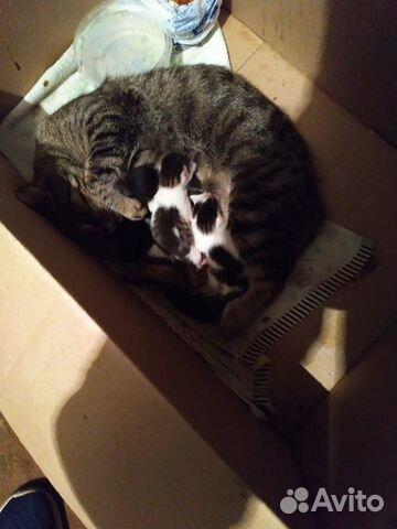 Кошка и 5-еро котят  89638099482 купить 1