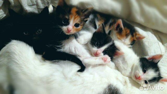 Котята на любой вкус  89879907788 купить 2