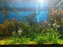 Аквариумные рыбки и растения, Декор. Снизил цену