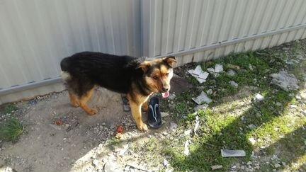 Найдена собака - Животные - Объявления в Марксе