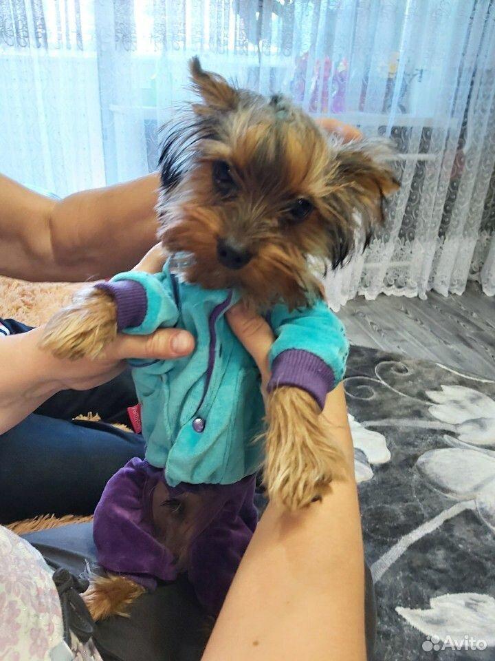 Собака  89607654230 купить 3