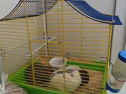 Крыски с клеткой
