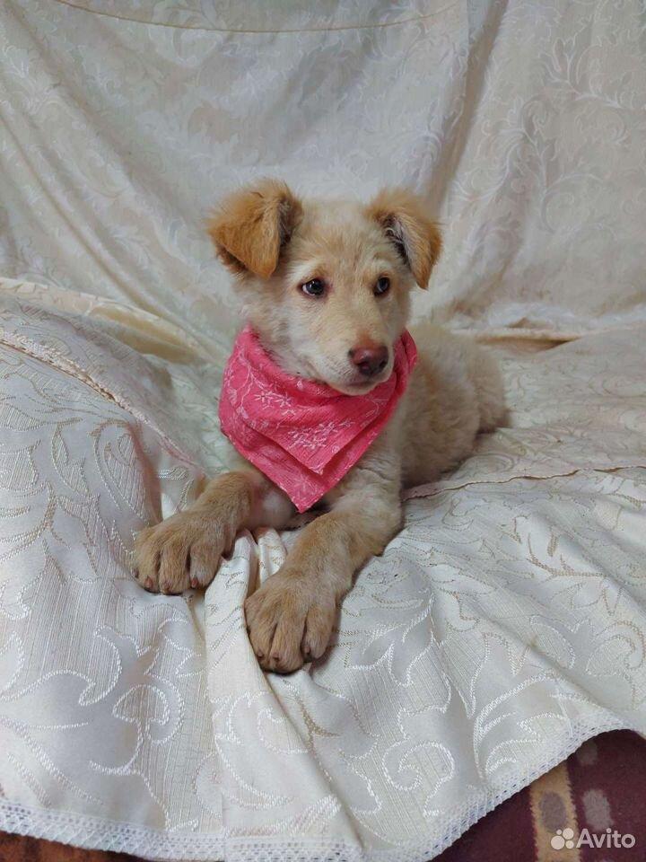 Щеночек-девочка 3 месяца  89147719263 купить 1