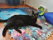 Супер кот Сэм