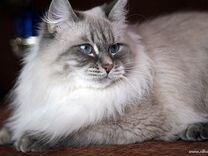 Котята и взрослые котики