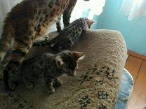 Продаются котики