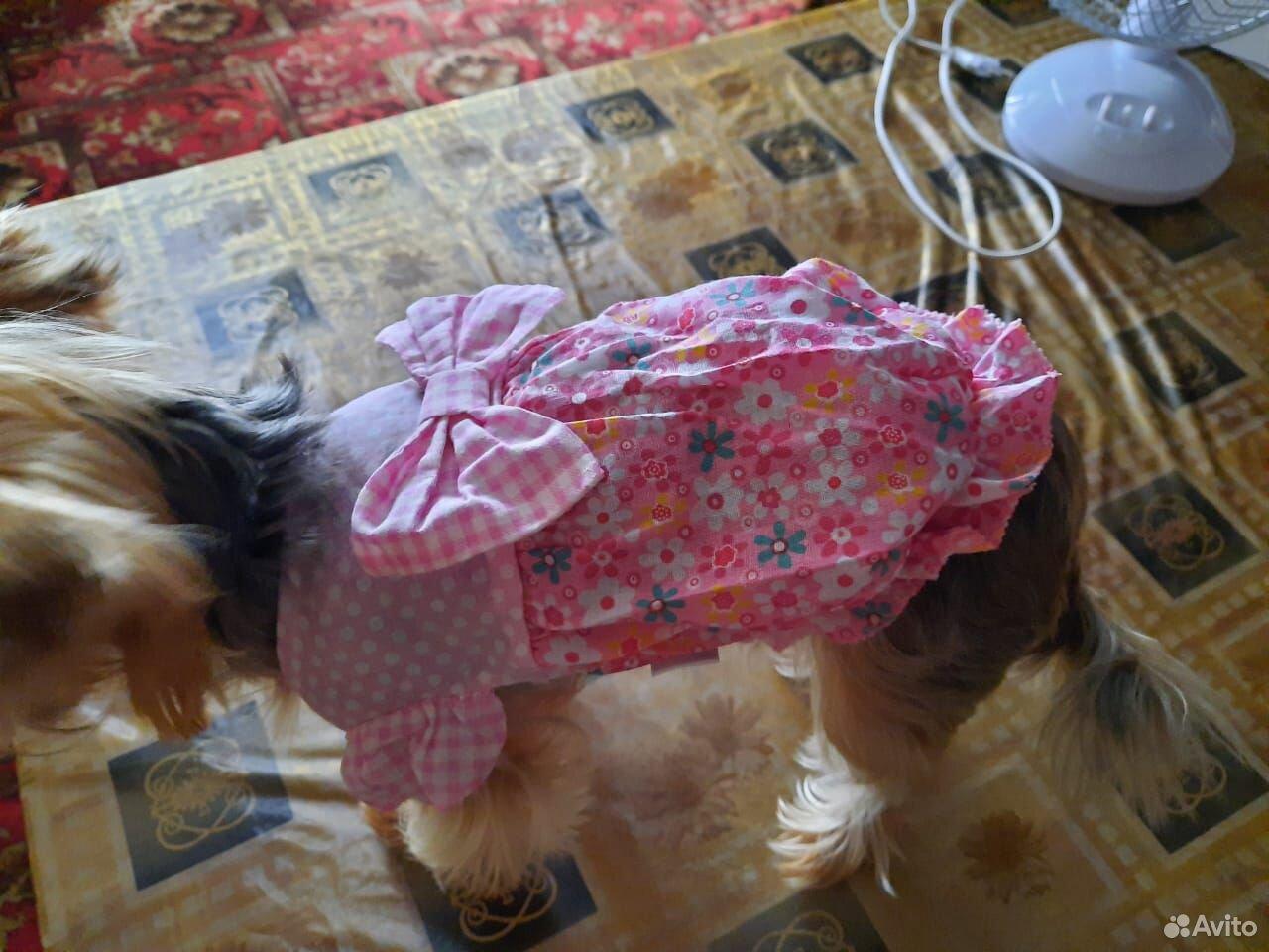 Платье для маленькой собаки размер s  89677666088 купить 7