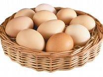 Яйцо инкубационное — Птицы в Геленджике