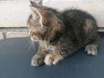 Отдам в добрые руки милых котят, дымчатый мальчик